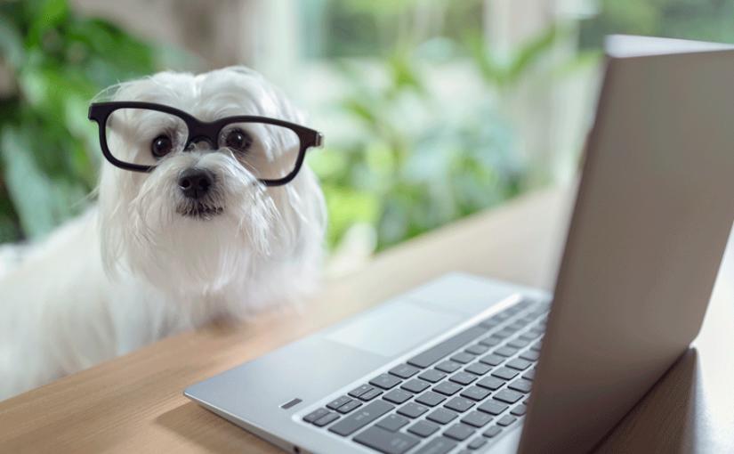 Mídias para pet shop: 6 dicas essenciais para você criar as suas