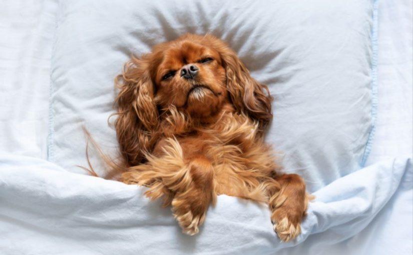 Quantas horas por dia dorme um cachorro?