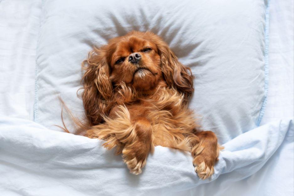 quantas horas dorme um cachorro