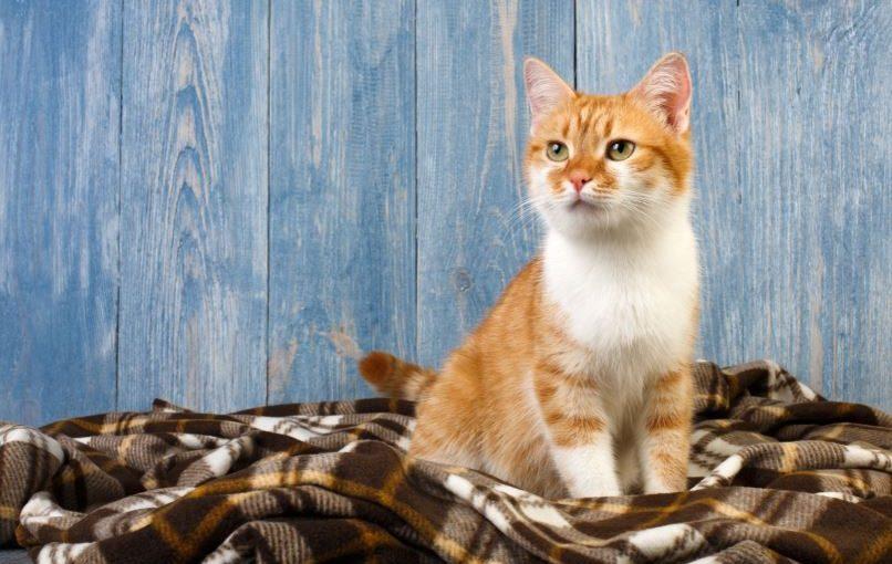 Dicas práticas para acabar com o cheiro de xixi de gato