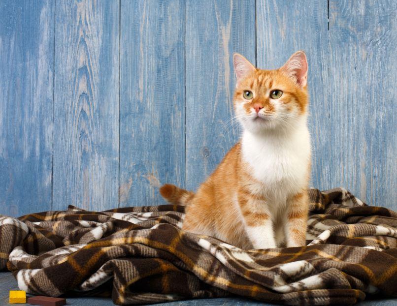 cheiro de xixi de gato