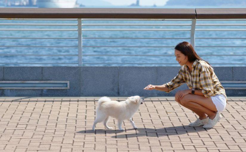 Cuidados ao passear com os pets em dias quentes