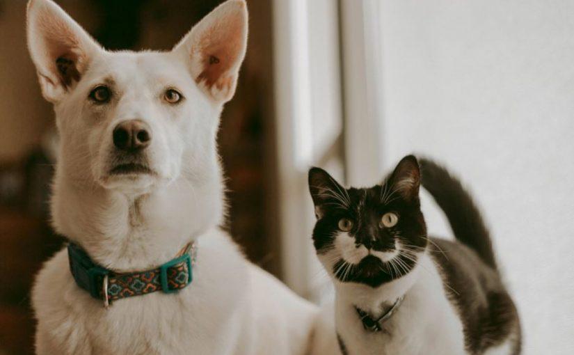 Gato pode comer ração de cachorro? Descubra!