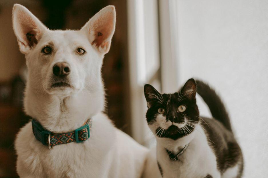 gato pode comer ração de cachorro