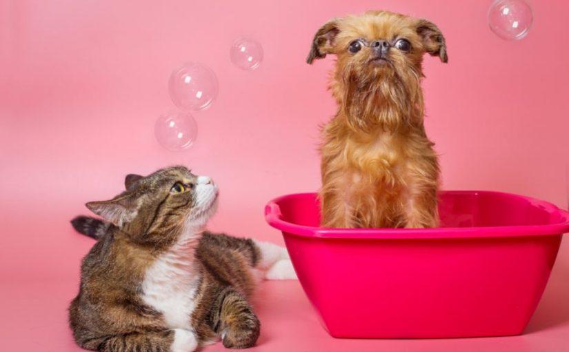 Produtos básicos de banho e tosa para vender no seu pet shop
