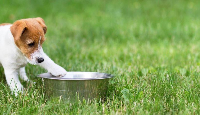 Comedouro para cachorro: saiba o modelo ideal