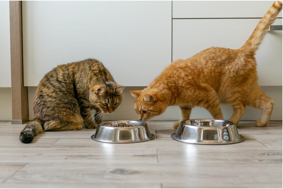 KiteKat Sachê: a opção ideal para o seu gato