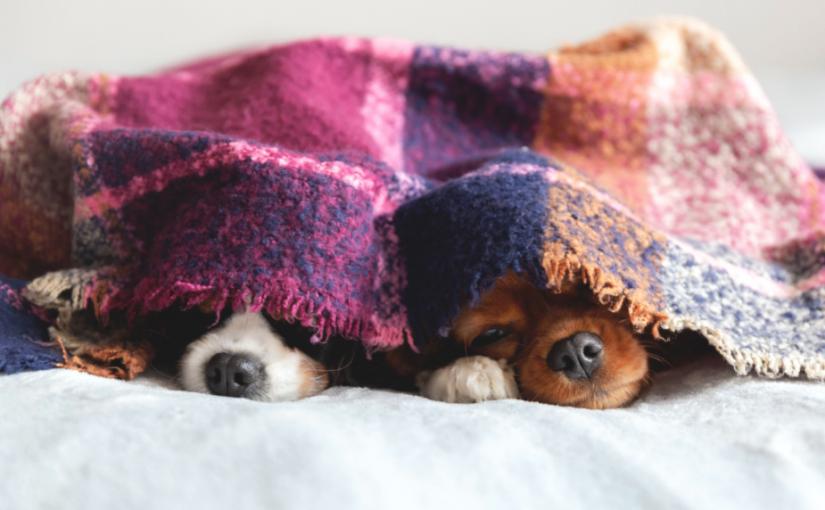 Dicas de cuidados com os animais no inverno