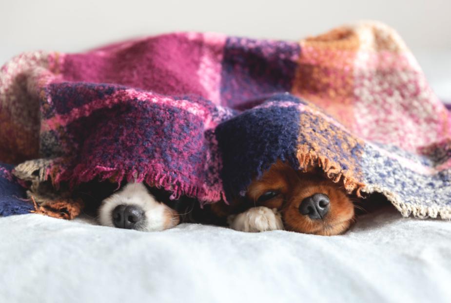 cuidados com os animais no inverno