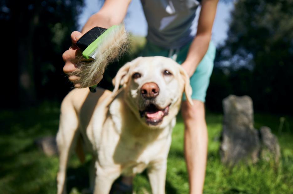 escova ideal para a pelagem do seu cachorro