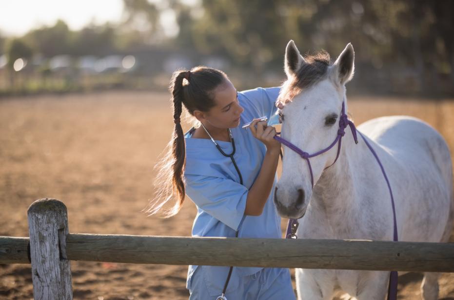 Oftalmologia veterinária